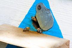 Las abejas salen de colmenas Imagen de archivo libre de regalías