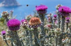 Las abejas sobre las flores escardan (el primer) Imagen de archivo libre de regalías