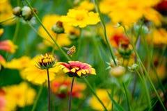 Las abejas trabajan difícilmente Foto de archivo libre de regalías