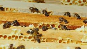 Las abejas trabajan en el marco con la opinión superior de la miel Fotos de archivo libres de regalías
