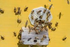 Las abejas traen la miel en la colmena amarilla en el colmenar Imagenes de archivo
