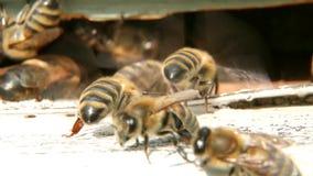 Las abejas ventilan la colmena almacen de metraje de vídeo