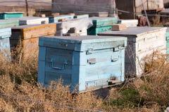 Las abejas viejas de la colmena Imágenes de archivo libres de regalías