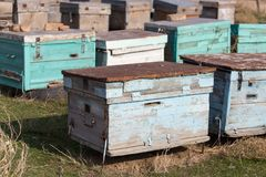 Las abejas viejas de la colmena Foto de archivo libre de regalías