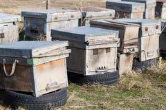 Las abejas viejas de la colmena Fotos de archivo