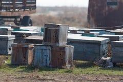 Las abejas viejas de la colmena Fotografía de archivo libre de regalías
