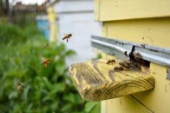 Las abejas vienen vuelo Foto de archivo