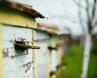 Las abejas vuelan alrededor de la colmena Fotografía de archivo libre de regalías
