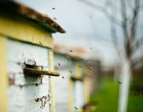 Las abejas vuelan alrededor de la colmena Imagen de archivo libre de regalías