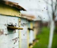 Las abejas vuelan alrededor de la colmena Foto de archivo libre de regalías