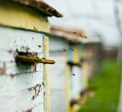 Las abejas vuelan alrededor de la colmena Fotos de archivo