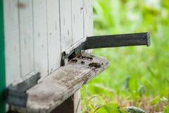 Las abejas vuelan cerca de colmena Foto de archivo libre de regalías