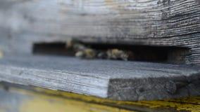 Las abejas vuelan de la colmena metrajes
