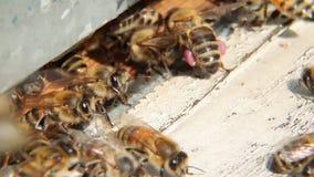 Las abejas vuelan en colmena almacen de video
