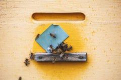 Las abejas vuelan en la colmena amarilla, cierre encima de la foto Fotografía de archivo