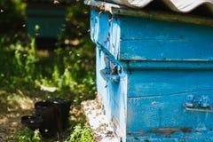 Las abejas vuelan en la entrada de la colmena están trayendo el polen Fotografía de archivo