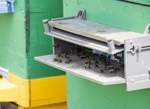 Las abejas vuelan en la entrada a la colmena Bandeja de la colmena Entrada del agujero a la colmena Imagen de archivo