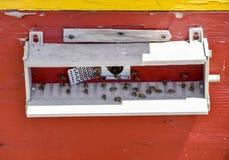 Las abejas vuelan en la entrada a la colmena Bandeja de la colmena Entrada del agujero a la colmena Foto de archivo