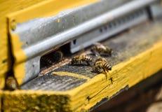 Las abejas vuelan en la entrada a la colmena Bandeja de la colmena Entrada del agujero a la colmena Fotografía de archivo