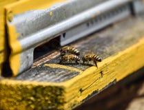 Las abejas vuelan en la entrada a la colmena Bandeja de la colmena Entrada del agujero a la colmena Imagen de archivo libre de regalías