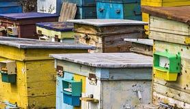 Las abejas vuelan en una colmena de madera Imagenes de archivo
