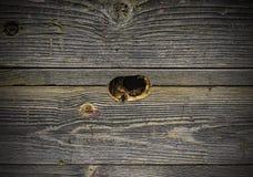 Las abejas vuelan en una colmena de madera Imagen de archivo