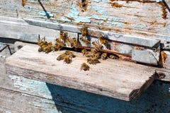 Las abejas vuelan en una colmena Primavera o verano en apiary_ Foto de archivo libre de regalías