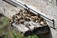 Las abejas vuelan a la colmena fotos de archivo