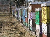 Las abejas vuelven a las colmenas durante la cosecha Imagen de archivo