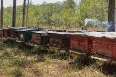 Las abejas vuelven a las colmenas durante la porción de la cosecha de abejas vuelan cerca de varias colmenas Imágenes de archivo libres de regalías