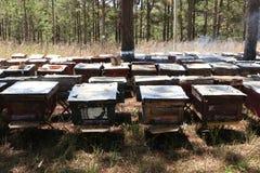 Las abejas vuelven a las colmenas durante la porción de la cosecha de abejas vuelan cerca de varias colmenas Foto de archivo