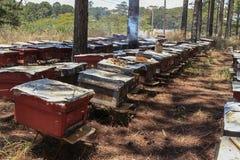 Las abejas vuelven a las colmenas durante la porción de la cosecha de abejas vuelan cerca de varias colmenas Fotografía de archivo