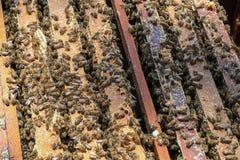 Las abejas vuelven a las colmenas durante la porción de la cosecha de abejas vuelan cerca de varias colmenas Imagen de archivo