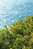 Las aguas del mar adriático y del verdor brillante en la orilla imagenes de archivo
