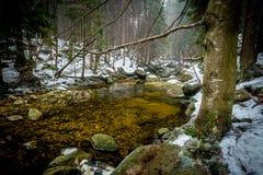 Las aguas tranquilas y claras del río de Mumlava en invierno foto de archivo