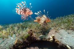 Las aguas tropicales del Mar Rojo imagenes de archivo