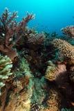 Las aguas tropicales del Mar Rojo fotografía de archivo