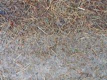 Las agujas caidas-abajo del pino cubren la tierra Fotografía de archivo libre de regalías