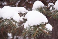 Las agujas del abeto de Rusia en nieve imagen de archivo