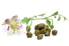 Las alcaparras conservadas en vinagre con la planta y la planta de la alcaparra florecen fotografía de archivo libre de regalías