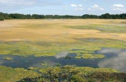 Las algas cubrieron el lago Imagen de archivo