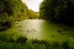 Las algas cubrieron el pantano foto de archivo libre de regalías