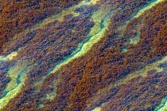 Las algas modelan para las texturas Imagen de archivo libre de regalías