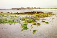 Las algas muestran su color durante la bajamar en la bahía de Balranald, U del norte fotos de archivo libres de regalías