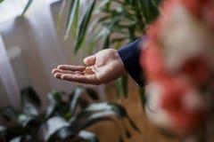 Las alianzas de boda de la novia en la palma de su mano Fotografía de archivo libre de regalías