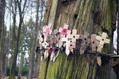 Las amapolas en un árbol con el alambre de púas Flandes colocan Foto de archivo libre de regalías