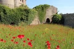 Las amapolas están creciendo en el patio de un castillo (Francia) Foto de archivo libre de regalías