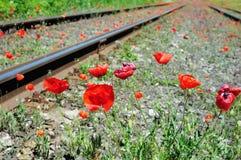 Las amapolas rojas salvajes acercan al ferrocarril Foto de archivo