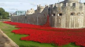 Las amapolas rojas vierten de la torre de Londres Imagen de archivo libre de regalías