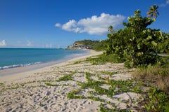 Las Antillas, el Caribe, Antigua, playa de Darkwood Imagen de archivo